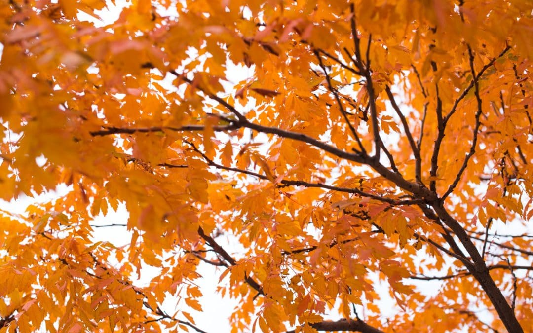 Prepare Your HVAC Unit for the Fall Season